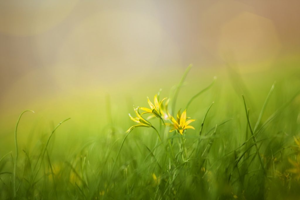 fű nitrogén